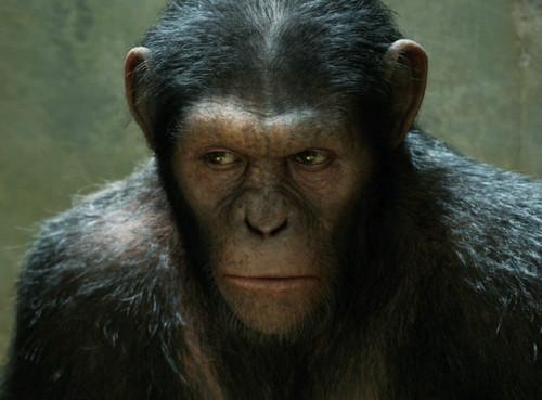 Восстание обезьян смотреть онлайн